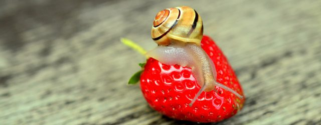 strawberry-799597_1920