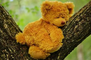 teddy-bear-792191_1920